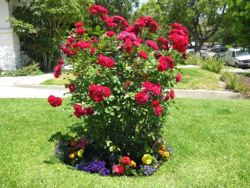 """nitultr's articles tagged """"Flower Bed Edging"""" - Page 2 - Blog de ..."""